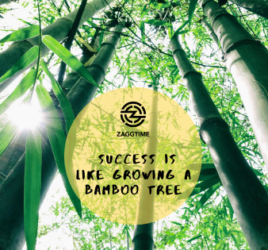 Success is like growing a bamboo tree